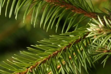 Sadzenie Drzewka Pamięci