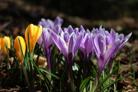 Spacer po okolicy w poszukiwaniu wiosny